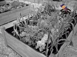 Cómo crear un huerto urbano en tu casa